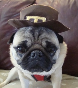 Happy Thanksgiving from the Greatest Pilgrim I ever met!